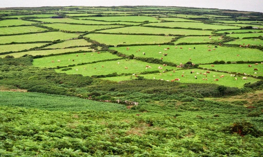 Bocage entre Saint Just et Saint Ives, Cornouailles, Angleterre, Grande-Bretagne, Royaume-Uni.