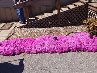 Grandma Norine's flowers