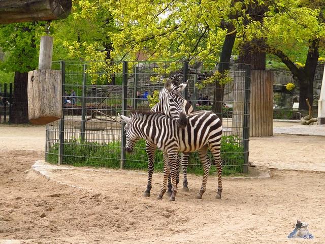 Zoo Berlin 29.04.2016   048