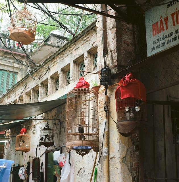 Hanoi - animals 2