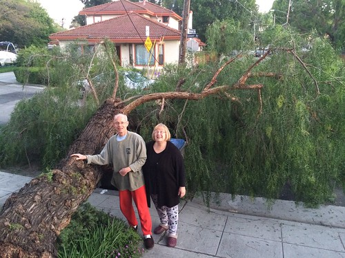 31 March 2016 Gary and Linda with fallen California Pepper tree San Jose CA