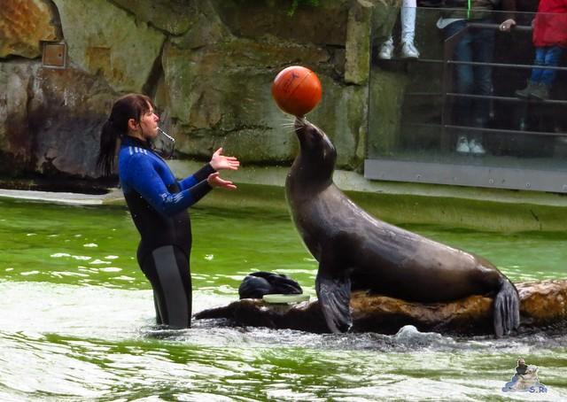 Zoo Berlin 29.04.2016   040