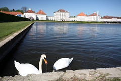 Nymphenburg swans