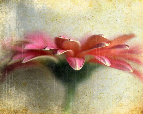 Flower - Cathy Panebianco