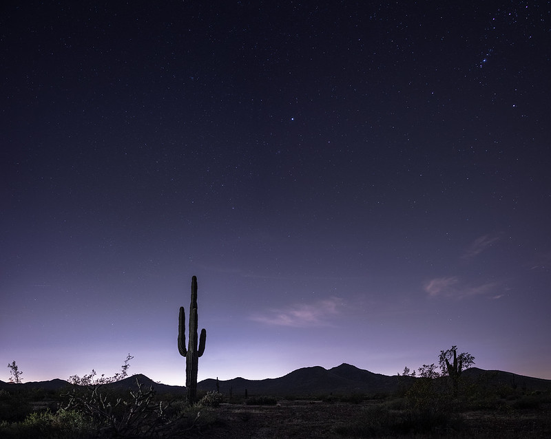 sonoran nights