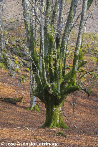 Parque natural de Gorbeia #DePaseoConLarri #Flickr -2807