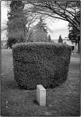 Solitary Headstone