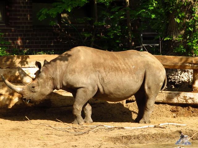 Zoo Berlin 29.04.2016   085
