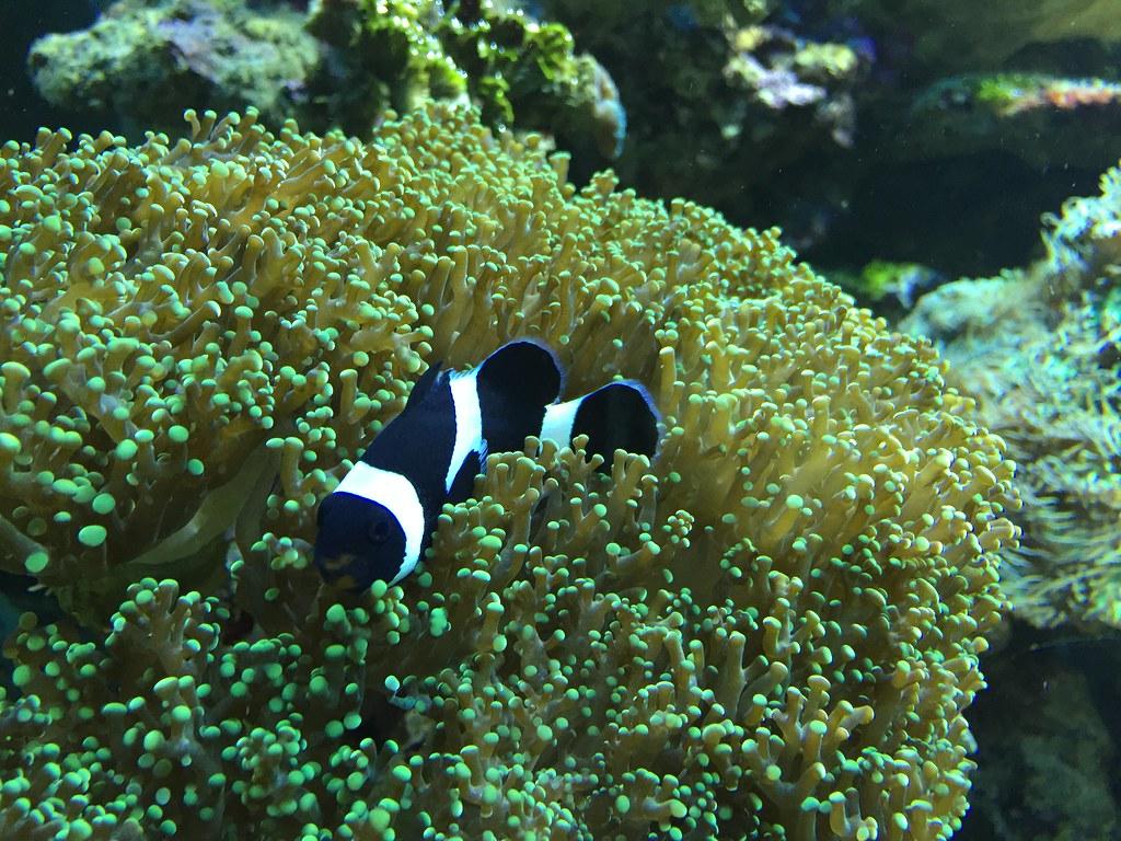 Aquarium Museum Luik