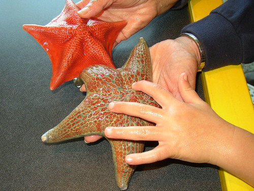 Hands on with sea stars at the Seymour Center @ Long Marine Lab | by Smart Destinations