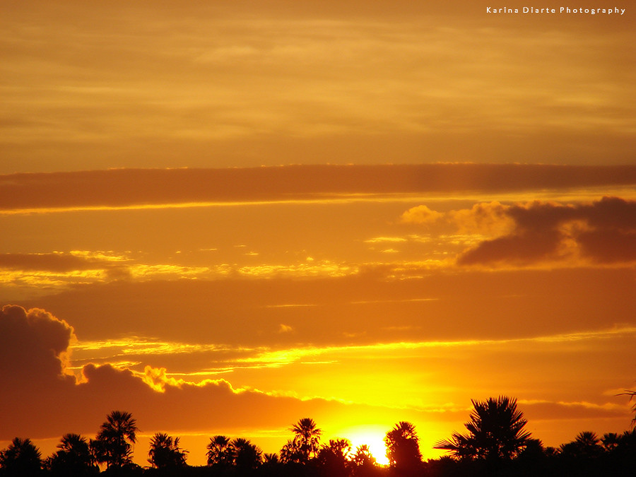 Cielo Dorado / Golden Sky