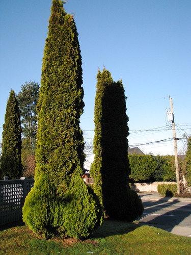 Vancouver penis-shaped hedges | by Sherrett