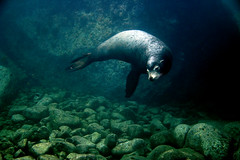 Sea Lion | by graspnext