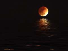 eclipsed moon flood | by ecstaticist - evanleeson.com