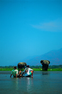 Clients viewing elephants on the Zambezi | by Exodus Travels - Reset your compass