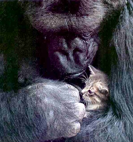 Koko and her Kitten | by Room With A View