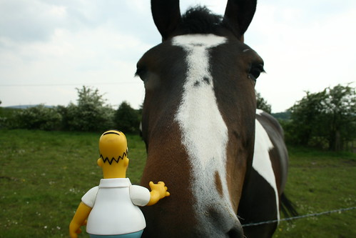 Homer strokes a horse....then it bit him 132/365 | by harry.1967