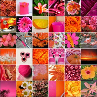 Pink & Orange | by hobbeszilla