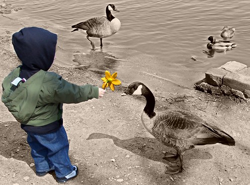 """The Boy and the Duck"" 