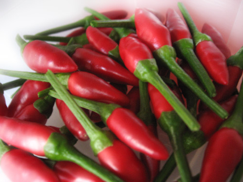 Our hot red peppers | by the Italian voice