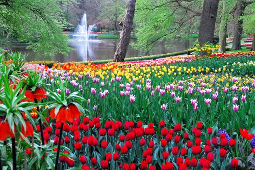Holland Tulip Tours