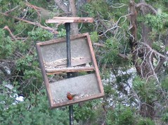 Bear Damage to Feeders | by Kenneth Cole Schneider