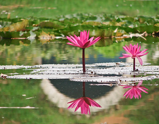 Picture Perfect Reflections | by Poorna Kedar