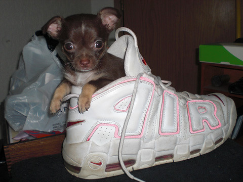 Shoe Puppy | by NorthValley