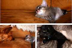 Kittens meet the grown ups | by houseboat eats