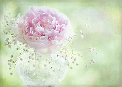 Soft on Peonies | by Jacky Parker Floral Art