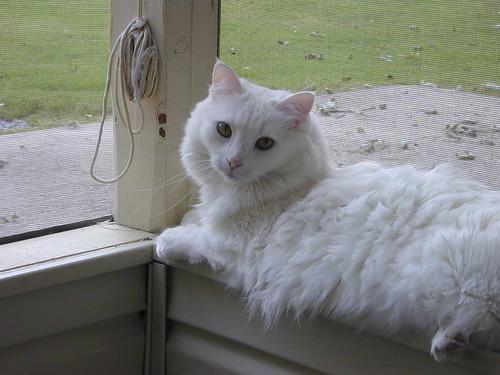 2006-09-11 Sugar in sunroom | Sugar loves to sit in the ...