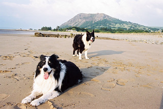 Rob and Indy on the Beach | by Mike & Indy