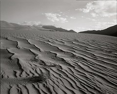 Great Sand Dunes National Park -- Flora and Sand | by wanderingYew2