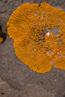 bright orange lichen | by nervous system