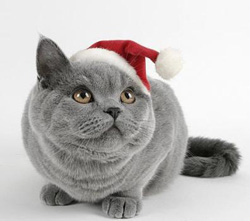 christmas-funny-cat small