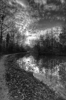 Herfst in Zwartwit / Autumn in Black and White | by Bas Lammers