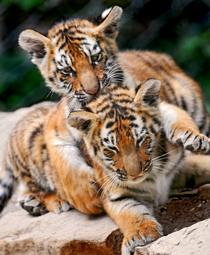 «I'm holding you tight!» | by Tambako the Jaguar