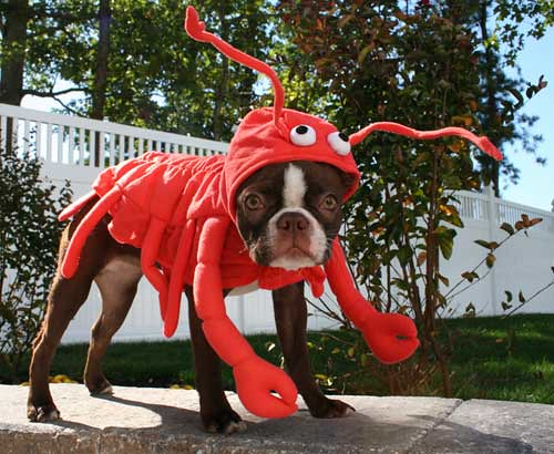 Lobster dog | by ConstructionDealMkting