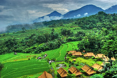 Rice fields view from Saranam Eco-Resort | by mrofiq
