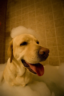 Ahhh....Bubble Bath...now, who is going to massage me??? | by Jackie & Sonny