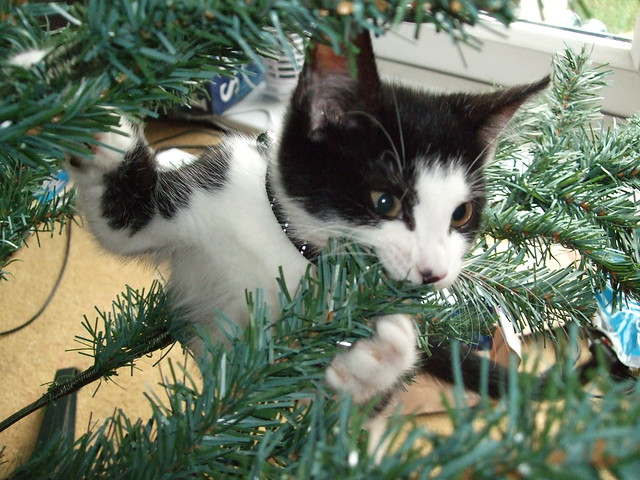 Cat nomming on Christmas tree