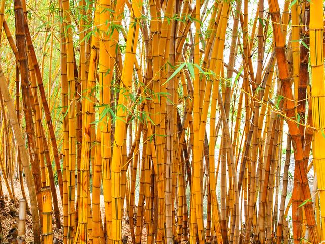 Lagoon and Bamboo Grove - Brisbane Botanic Gardens Mt Coot-tha