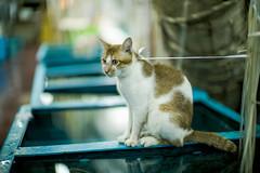 城外的人想衝進來,城裡的人想逃出來。有些人看到了貓,有些人看到了繩子。
