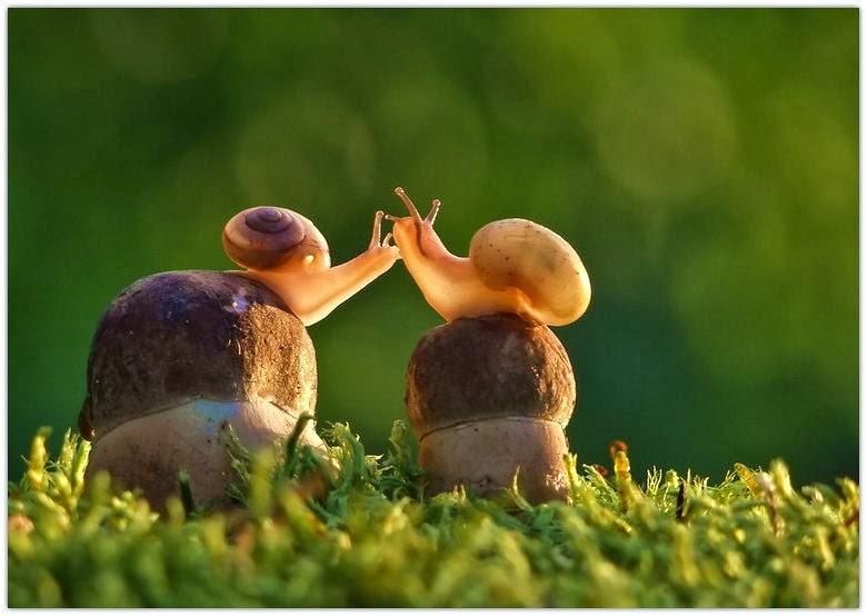 Snail-lover by Vyacheslav Mishchenko (4) (1)