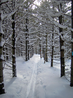 Kolapore Ski Trail Through the Pines | by Bobcatnorth