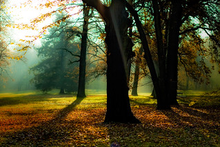 Herbst | by 96dpi