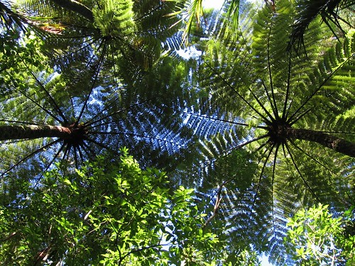 Fern roof | by Kathrin Marks