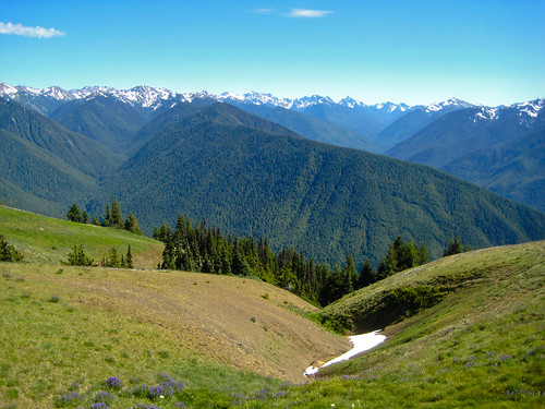 Hurricane Ridge | by yugenro