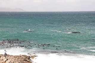 Whales at Hermanus | by exfordy