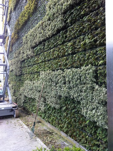 Green wall yvr airport vancouver british columbia for Green wall vancouver